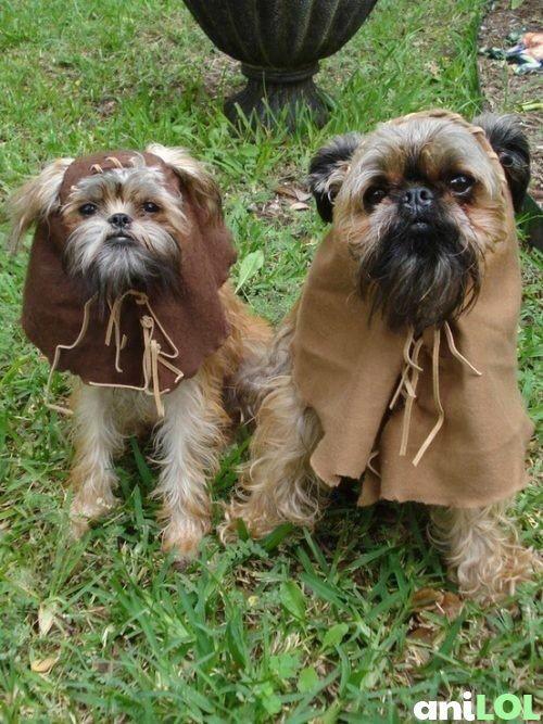 EwoksDresses Up, Dogs Costumes, Dogs Halloween Costumes, Stars Wars, Shih Tzu, Costumes Ideas, Starwars, Animal, Pets Costumes