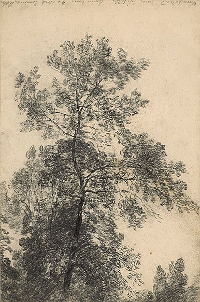 John Constable drawing of a tree top.