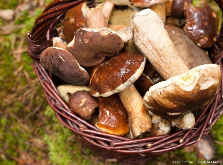 Cèpes, girolles, rosés...Apprenez à reconnaître 9 champignons, quand les cueillir et avec quels autres mauvais champignons ne pas les confondre.