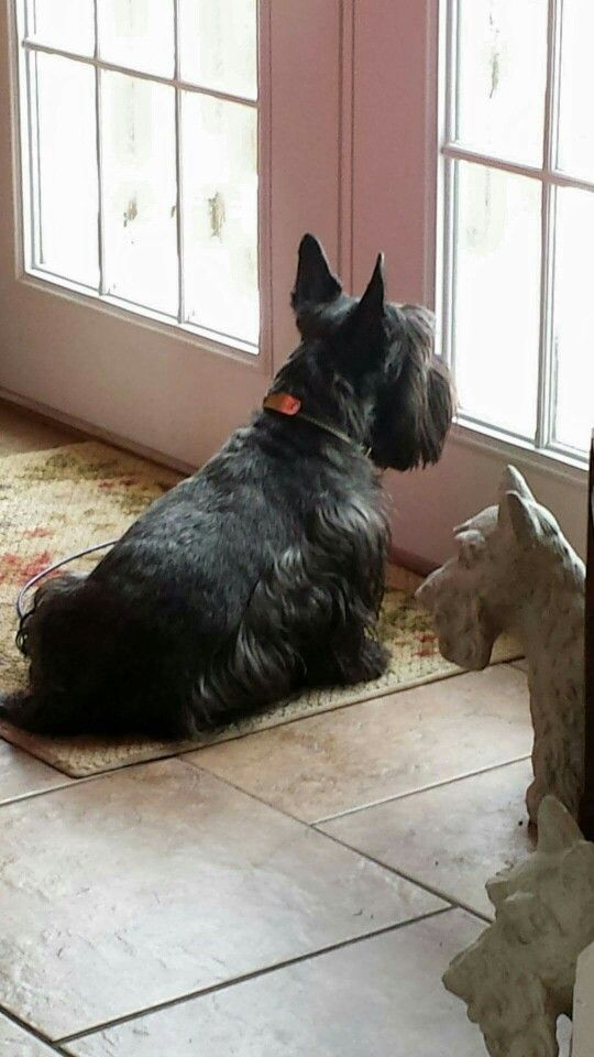 130 best dogs images on Pinterest | Doggies, Little dogs and ...