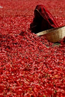 a sea of chili and beautiful sari