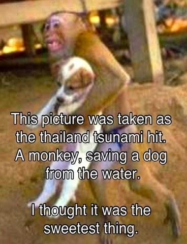 Awesome little monkey!