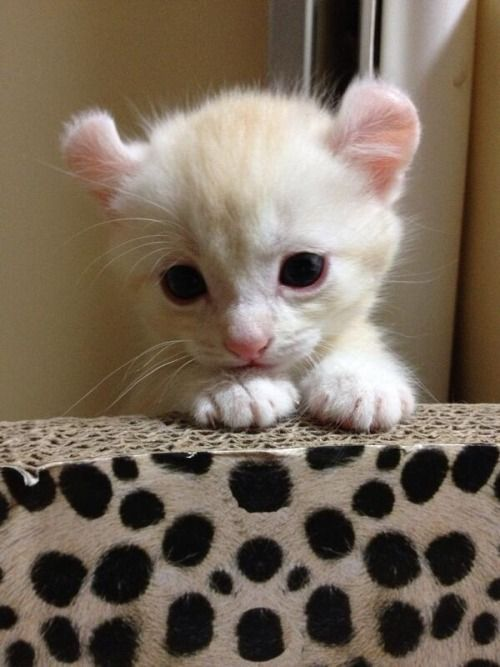 See the cutest cat you will love. Just for the cat lover. cheers.