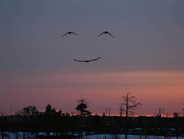 Don't worry!  Be Happy!: Photos, Happy Faces, Perfect Time, Pictures, Things, Birds, Smiley Faces, Smile Faces, Mothers Natural