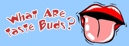 What Are Taste Buds? | KidsHealth  #BeCurious