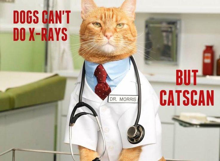 Catscan 😹😹 | Cat puns, Medical jokes, Funny