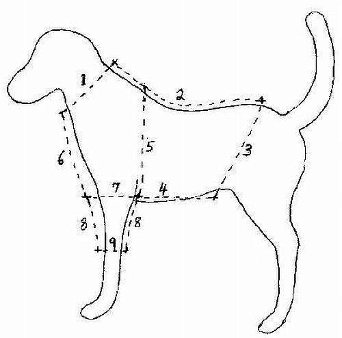 Drawing showing where to take measurements for dog clothing