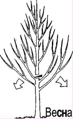 Исправляем существующее дерево, превращая его в идеальное!