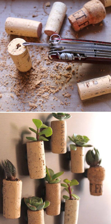 cute succulent magnets