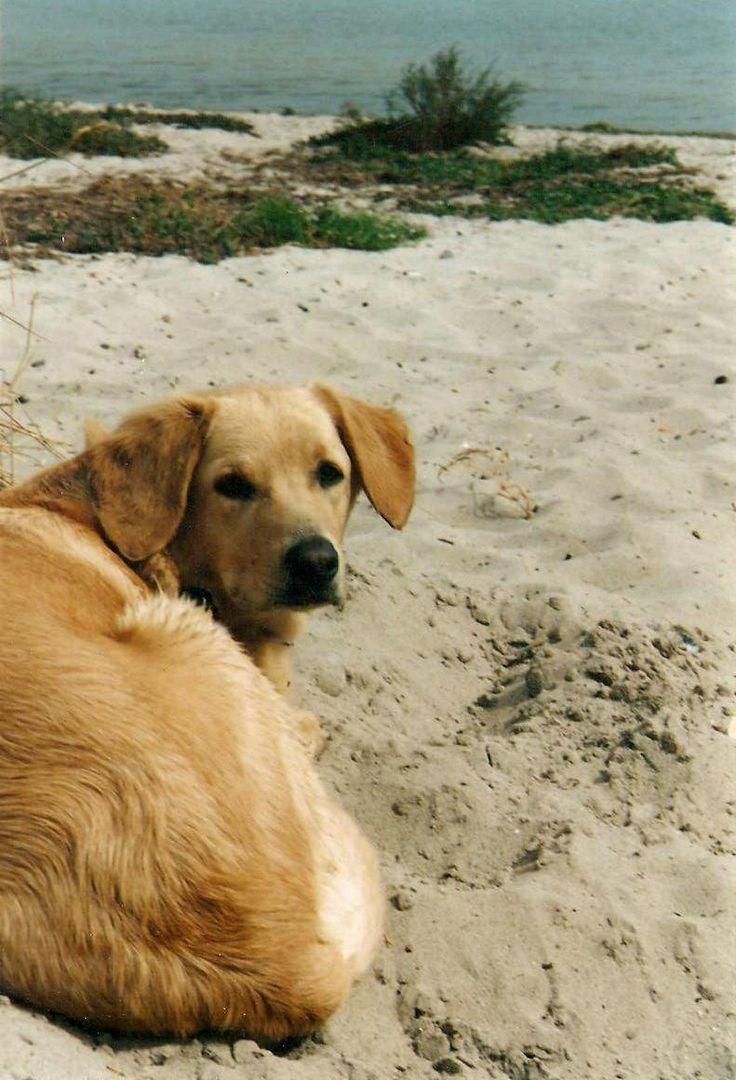 Wer Urlaub  in Ostfriesland mit Hund macht, kann sich auf tolle Hundestrände freuen, zum Beispiel am schönen Hundestrand in Schillig!