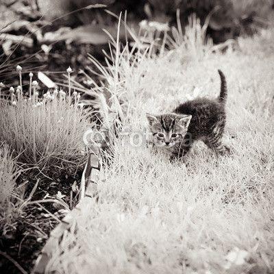 Kitten verkennen tuin