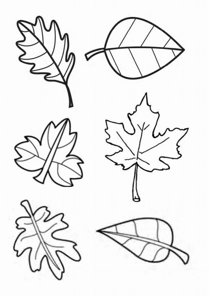 Осенние листья картинки для оформления распечатать и вырезать а4