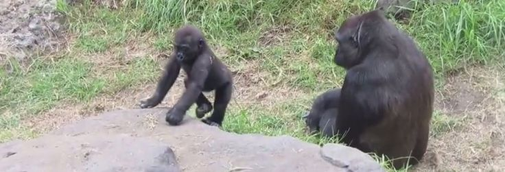 On November 7, a baby gorilla named Kabibe was crushed to death at the San Francisco Zoo by an inherently dangerous 30-year-old door unequipped with the most basic of safety features