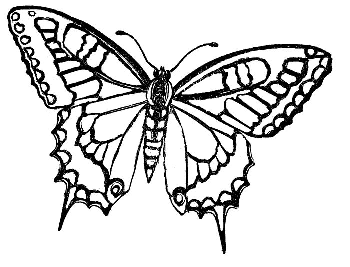 geometric butterfly coloring pages - photo #7
