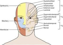 Image result for supraorbital nerve
