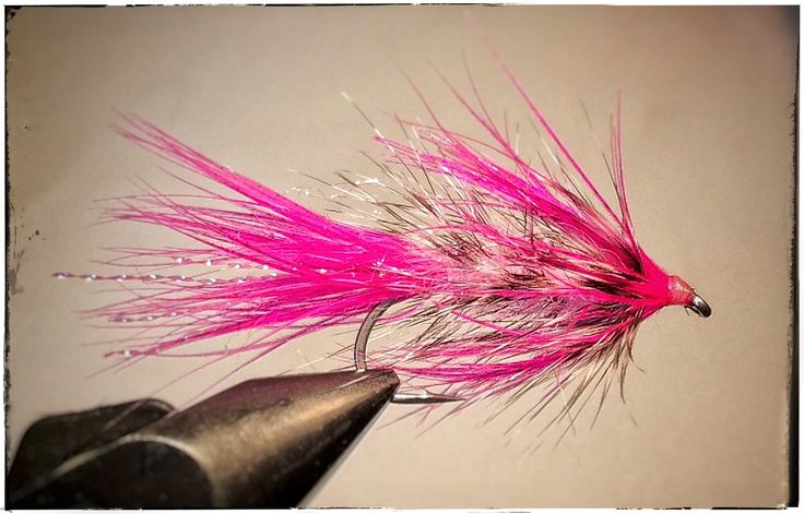 Winther fly for seatrout.