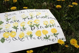 """Save the Dandelions!  Ralph Waldo Emerson said, """"A weed is just a plant whose virtues have not yet been discovered."""" This rings so true for so many of our favorite spring flowers, especially the dandelion. We love the dandelion and all its virtues it has to give."""