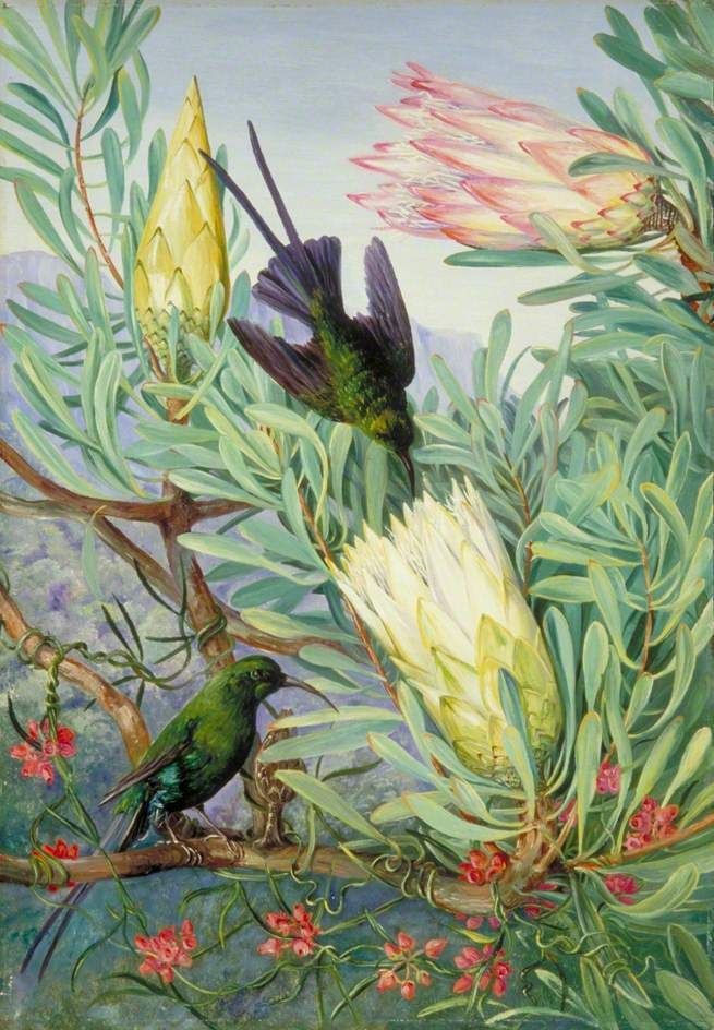"Marianne North. ""Honeyflowers and Honeysuckers"" (1882), South Africa (via WikiPaintings)"