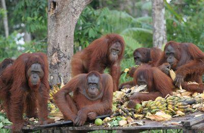 Lestarikan Flora & Fauna Indonesia!