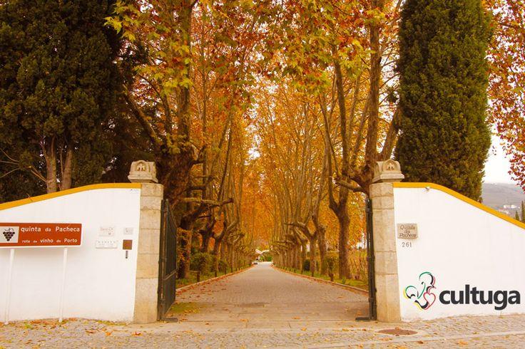 Entrada da Quinta da Pacheca. Vinícola | Portugal | Roteiro de viagem | Vinho do Porto