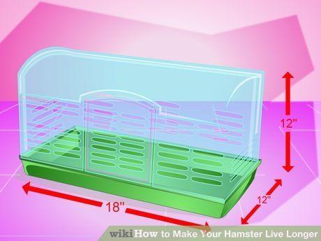 Image titled Make Your Hamster Live Longer Step 1