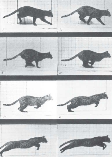 "Eadweard Muybridge, 'Cat Running' (1887).  Did you see Google on Muybridge's birthday?;) ""Muybridge changed the way we see and think about the world"" KB"