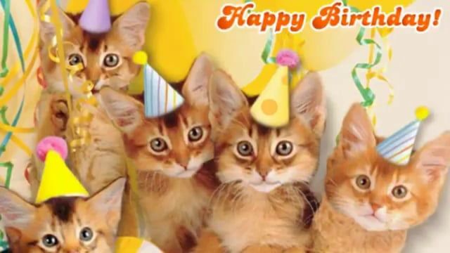 Cute Cats Happy Birthday | Staff Picks Categories Channels Groups Apps More…