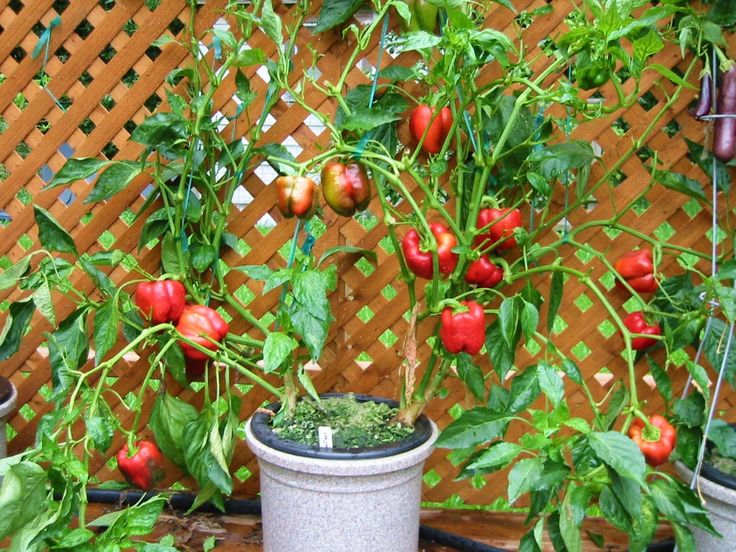 Hydroponic Gardening | Less Work, more fruitful.....!!