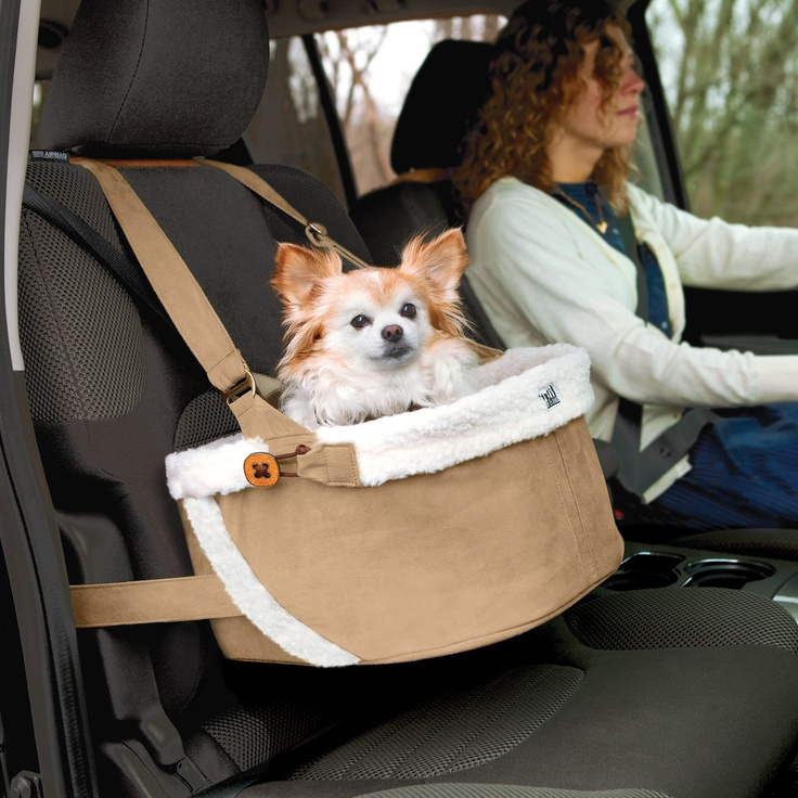 Best Dog Bed For Puppies Petsmart
