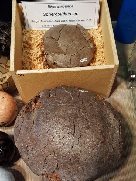 Яйца динозавров зауроподов, предположительно Spheroolithus и Faveoloolithus ningxiaensis очень хорошей сохранности