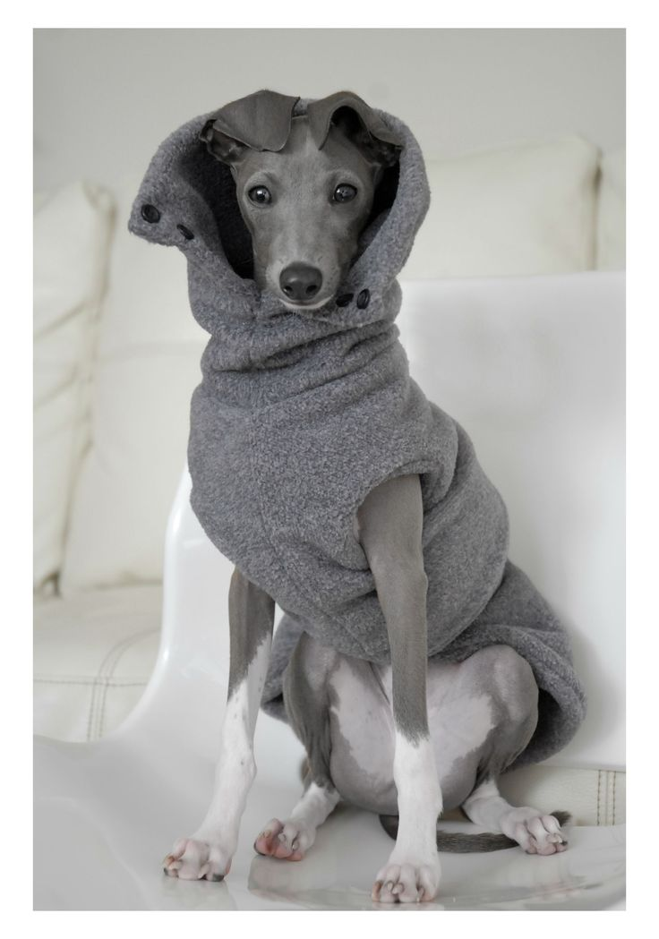 Made Chihuahua Clothes