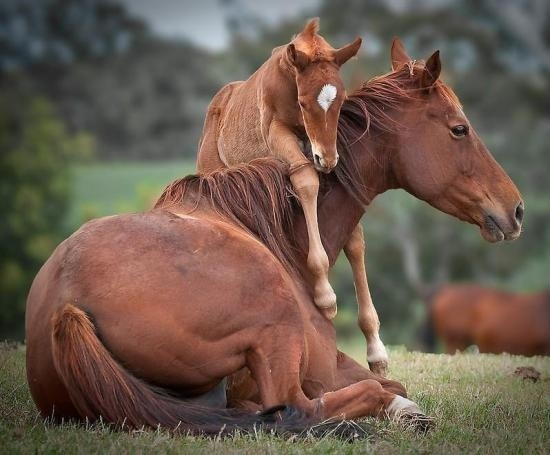 How darling is this?! One of my favorite photos of a mare and her foal. What a beautiful moment!