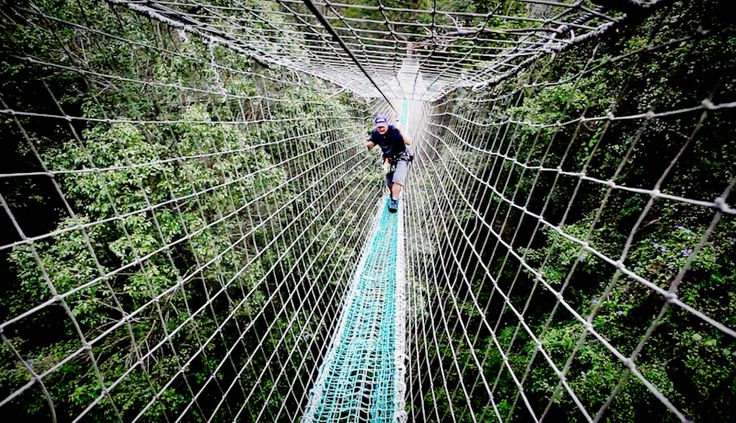 Ever wanted to do this? Book now for your adventure at Tamborine Mountain http://ticketsandtours.com.au/travel/tree-top-challenge/