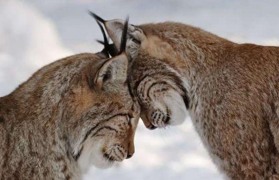 """Kitty love ~ I love when my cats do the """"head bump""""."""