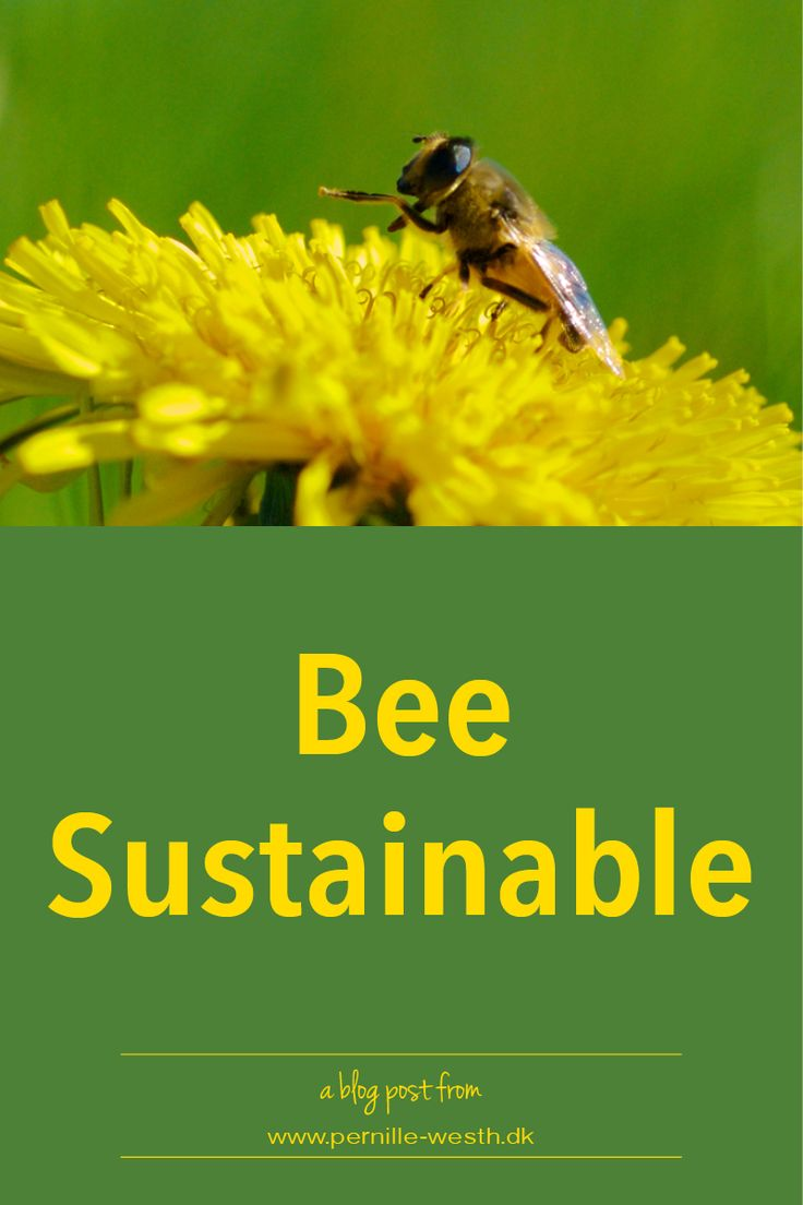 Did you know that if it was not for bees, we would have a huge problem in getting for example fruit, flowers, and berries? Did you also know that the honey bee is endangered? And did you know that what bees use as fuel to keep them flying - honey - is a natural remedy? Eg. use it as a relief for sore throat, and use it to heal minor burns, and rashes. Read the full blog post; http://www.pernille-westh-blog.com/single-post/2016/07/06/Bee-Sustainable