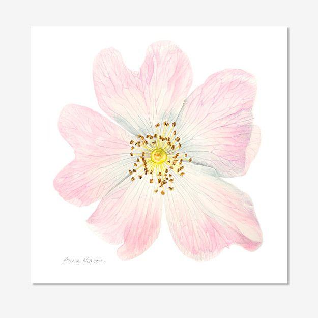 318 best images about art botanique aquarelles fleurs for Botanic fleurs artificielles