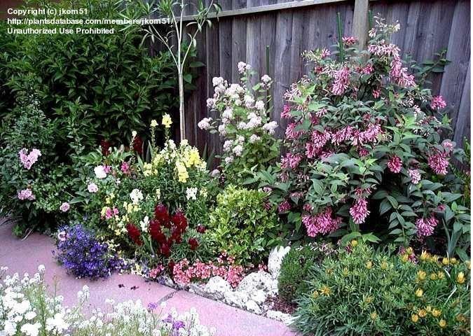 fl flowering plants  images  pinterest