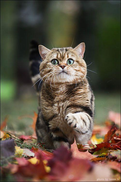Funny Fat Kitten