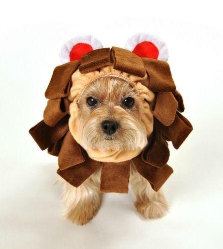 Dog Costume - Lion King