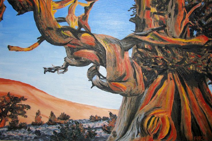 Bristlecone Pine, original oil painting by artist Maureen McKay