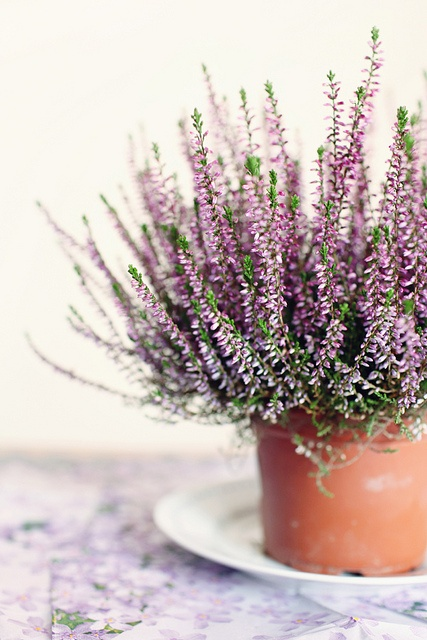 Lavender color flowers in the kitchen