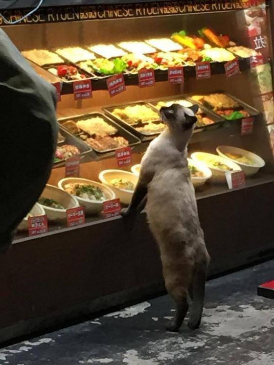 【画像あり】「猫が弁当頼んでる!」 大阪市西成区の中華料理店で決定的な瞬間が撮られる | 2ちゃんねるスレッドまとめブログ - アルファルファモザイク