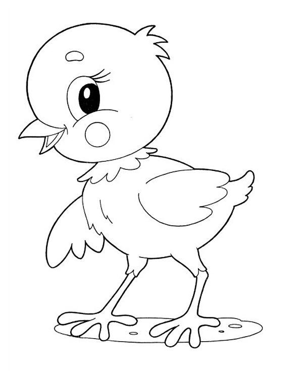 раскраски цыпленок для малышей бесплатно