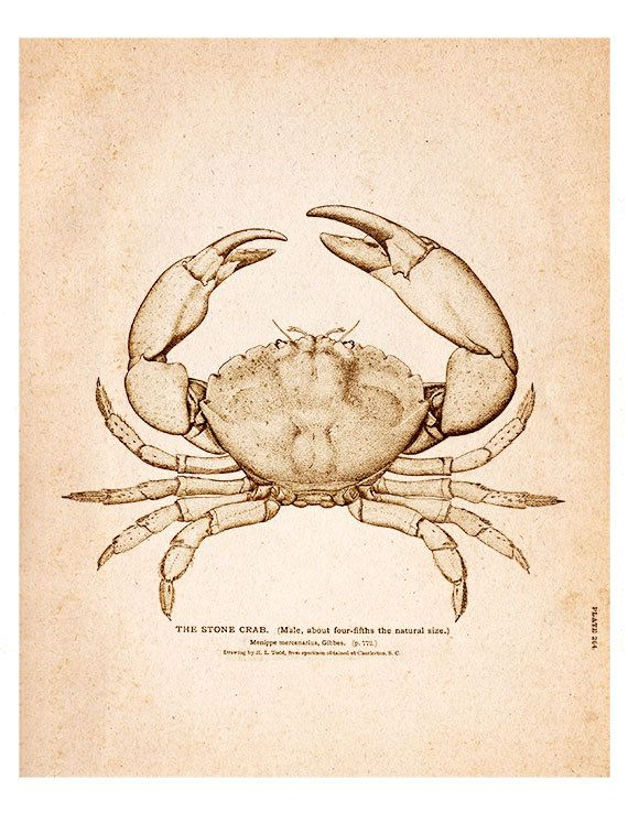 Crab 05 Vintage Illustration Wall Decor Print 8 by SeashoreDecors, $9.95