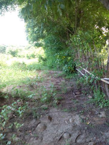 Jual tanah kebun srikaya dan 450 pohon jati