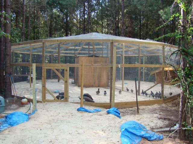 13c4cf2bf802d2323e1dc8e05acaf440 chicken houses chicken coops 27 best aviary ideas images on pinterest,Pheasant Housing Plans
