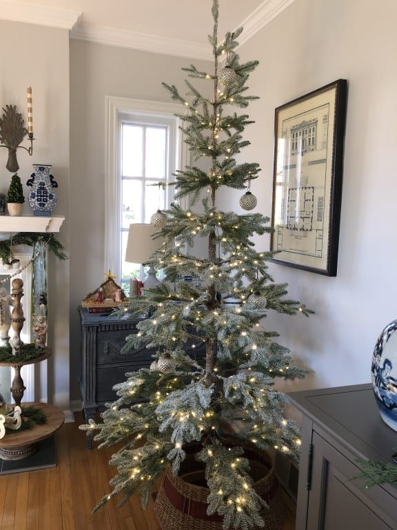 Frosted Alpine Balsam Fir Tree Thin Christmas Tree
