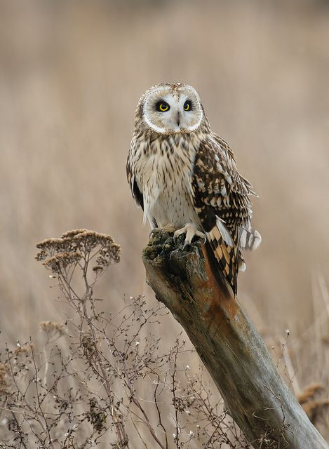 Remotely Lucky by Wes Aslin, via Flickr #owl