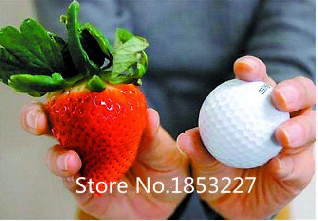 Fruit seeds 200pcs Super Giant Strawberry perfume bonsai strawberry fruit, home gardening DIY #Affiliate