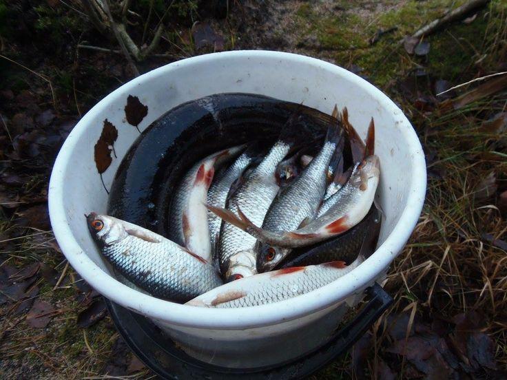 Olit kova kalastamaan ja joka päivä saimme nauttia kalansaaliistasi. Saimaa antoi lahjojaan runsaasti. Niistä saivat nauttia myös naapurit, lapset ja sukulaiset sekä ystävät.